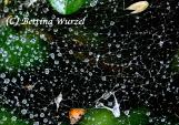 Spinnengewebe | © Dr. Bettina Wurzel | Fotoclub 2000 Aachen | 3. Platz, Jahresausstellung 2016