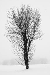 Baum in einer Schneelandschaft - Verschneite Landschaften | © Andreas Schniertshauer | Fotoclub 2000 Aachen
