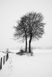 Zwei Bäume an einem schneebedecktem Feldweg - Verschneite Landschaften | © Andreas Schniertshauer | Fotoclub 2000 Aachen