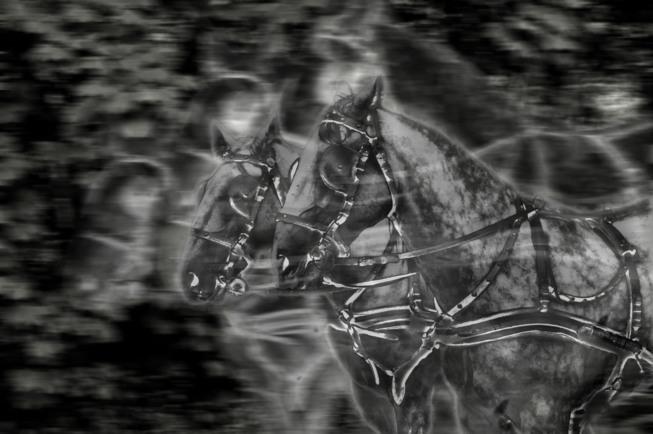 Geisterpferde | © Udo Hostert | Fotoclub 2000 Aachen