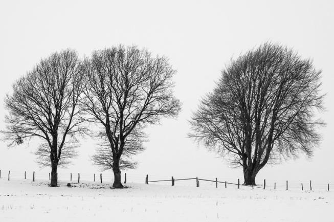 Drei Bäume in einer Schneelandschaft - Verschneite Landschaften | © Andreas Schniertshauer | Fotoclub 2000 Aachen