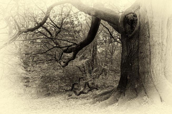 Landschaften und Bäume in sw | © Maria Dautzenberg | Fotoclub 2000 Aachen